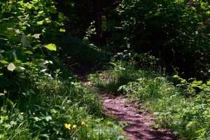 Unchosen Path
